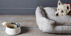 Modern Dog Bowls from Concrete Designs