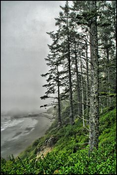 I will go to La Push. THIS IS MY PLACE, IN SO MANY WAYS... ALONG WITH A GREAT FRIEND, I WATCHED THE YEAR 2000 COME INTO BEING, ON THAT BEACH... WE WATCHED THE FIREWORKS FROM THE TOWN.... AND I HAVE HIKED THERE SO MANY TIMES... MAYBE I NEED TO GO BACK..