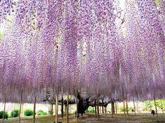 Ashikaga Flower Park9