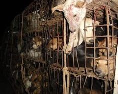 Soi Dog Foundation - End the Dog Meat Trade. This is just shocking that it happens in this day & age