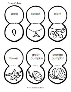 Pumpkin Life Cycle Sequencing Activity – Printable and Lesson Plan