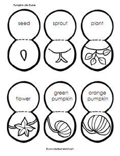 pumpkin life cycle pop up
