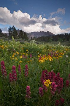 La Plata Mountains of Southern Colorado. What memories I have spending summers here growing up!!!!!!!!!