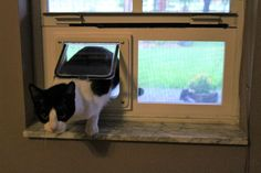 Learn how to build a frame for a cat door to be fitted for a window. Cat Door For Window, Pet Door, Pet Urine, Kitty Games, Cat Furniture, Diy Stuffed Animals, Auckland, Homesteading, Windows