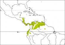 Image from http://www.hbw.com/sites/default/files/styles/medium/public/maps/black-striped-sparrow-arremonops-conirostris-distribution-map.jpg?itok=ELEZaesE.