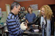 El Cabildo de Gran Canaria fomenta la adopción de animales del Albergue Insular