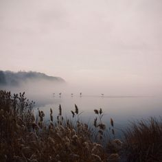 Whitney Hayes . Inspiring Places . Favorite Places And Spaces . Fog .