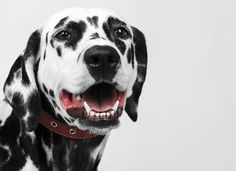 Infection, disease and other oral problems are far too common in dogs. Here are five things that can improve your dog's teeth.