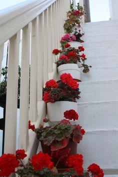 the geranium cottage X ღɱɧღ ||