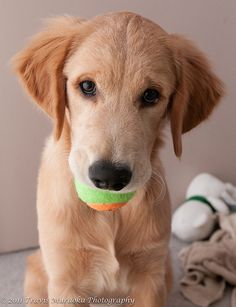 Kazu wants to play ball...5 months old in this picture.