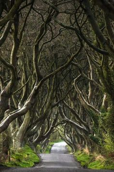 The Dark Hedges, Stranocum, Ballymoney, County Antrim, Northern Ireland. This beautiful avenue of beech trees was planted by the Stuart family in the eighteenth century. It was intended as a compelling landscape feature to impress visitors as they approached the entrance to their Georgian mansion, Gracehill House. Two centuries later, the trees remain a magnificent sight and have become one of the most photographed natural phenomena in Northern Ireland.