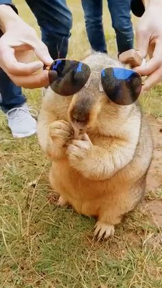 Big sunglasses, big silly squirrels - My CMS Funny Cat Photos, Funny Animal Videos, Cute Funny Animals, Funny Animal Pictures, Cute Baby Animals, Funny Cute, Gato Animal, My Animal, Zoo Animals
