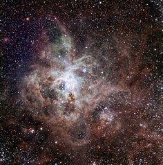 銀河系外の小銀河、大マゼラン雲の中のタランチュラ星雲。地球から17万光年。(borrowed photo)