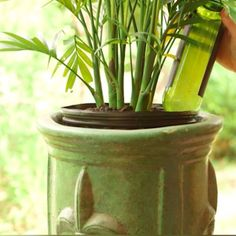 Ever wish your plants could just water themselves? They can!