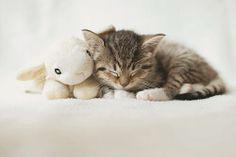 We think this little guy has the right idea of Valentines! :) ♡ http://ift.tt/1ghkltc  www.SHOPTHREECOOLCATS.com  #valentine  #cats  #stuffedanimal  #love  #cuddling  #sleeping    (Source: attackofthecute.com)