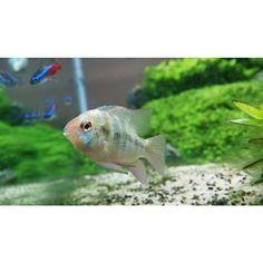 Visit Aquathusiast.com For Great Aquascape Features, News And Reviews!  #plantedtank #
