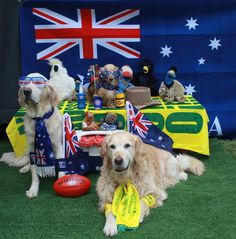 "Amanda Robinson - ""L-R : 'Mimi', little 'Scout', and our new Rescue Girl, 'Cully', showing their ""True Blue"" Aussie Spirit, by Celebrating Australia Day with some of their Aussie Toys and Icons #thedogline"""