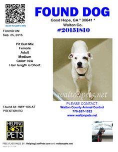 Found Dog - Pit Bull - Good Hope, GA, United States