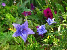 Petra Rosso' Garden. Blue & purple flower bed. Summer.