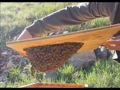 Honey bee swarm lure attract free bees beekeeper secret pheremone scent  bait