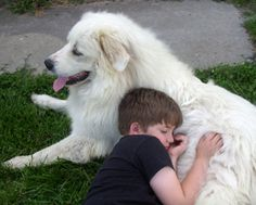Our dog and son #great-pryenees
