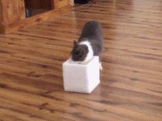 Cat Prank