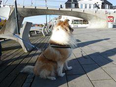 Lassie på brygga