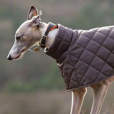 Quilted Showerproof Washable Dog Coat