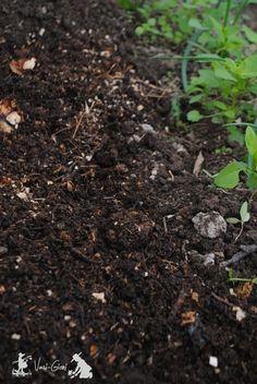 Plantarea rasadurilor de rosii - sfaturi - magazinul de acasă Plants, Seedlings, Garden, Tomato