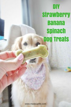 pet treats recipes Products is part of Best Homemade Dog Treats Recipes How To Make Diy Dog Treats - DIY Dog Treats Your Pets Will Love Diy Dog Treats, Dog Treat Recipes, Healthy Dog Treats, Dog Food Recipes, Frozen Dog Treats, Puppy Treats, Dog Training Methods, Basic Dog Training, Dog Training Techniques