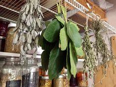 Fig Leaf Tea - Garden Variety Life Fig Leaf Tea, Fig Recipes, Drink Recipes, Food Humor, Funny Food, Fig Leaves, Fig Tree, Tea Blends, Drying Herbs