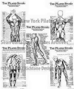 The Pilates Anatomy Posters