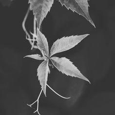 #flowers #black #white #blackandwhite #nature #me #happy #wednesday #instagood #instanature #macro #macrophoto #macrophotography #photography #photooftheday #cute #gogreen #green #insta #smile #love #plants