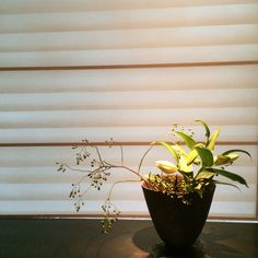 rosehip   #flower #shop #works #matilda #中目黒 Matilda, It Works, Planter Pots, Flowers, Shop, Royal Icing Flowers, Nailed It, Flower, Florals