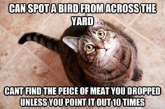 This look like and acts like my cat Tiger, except we don't feed her meat.