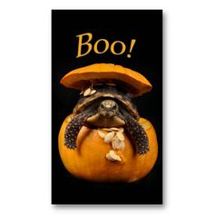 Halloween Turtle in Jack O Lantern Gift Tags & Cards ~Pack of 100 $29.95~  ~This design also available on other items at Zazzle.com/rebeccabrittain ~ 2013 Rebecca Brittain Photography