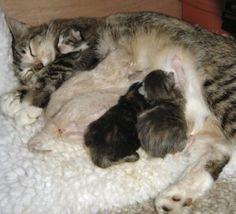 http://meoowzresq.com/free-info/kitten-season/