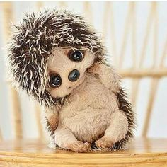 welcome to my world of cute stuff animals Needle Felted Animals, Felt Animals, Animals And Pets, Funny Animals, Baby Animals Pictures, Teddy Toys, Cute Stuffed Animals, Cute Animal Drawings, Cute Little Animals