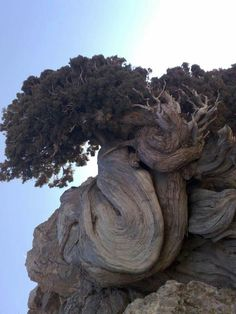 Looks like this tree is snuggling with the cliff behind it. Beautiful.