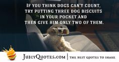 Quotes About Dogs - 31 Cute Dog Quotes, Best Quotes, Dog Biscuits, Picture Quotes, Best Dogs, Cute Dogs, Dog Lovers, Love You, Sayings