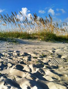 Sea oats flow in the breeze in Myrtle Beach.