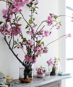 feng shui flower symbols - cherry blossoms