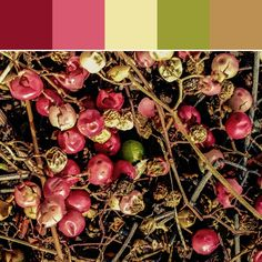 《Tiny Fruits Palette》