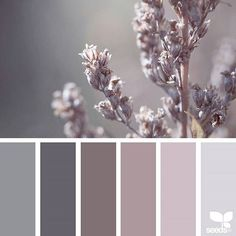 Color Spring Color Spring Design Seeds Color Palettes Posted Daily For All Who Love Color Inspiration And Ideas For A Decorating Colour Palette In Soft Pinky Grey Design Seeds, Colour Pallette, Color Combos, Color Trends, Purple Palette, Neutral Palette, Paint Colors For Home, House Colors, Purple Paint Colors