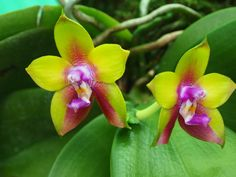 Phal Dragon Tree Eagle  Photo:  This Photo was uploaded by woollymammothphotos.