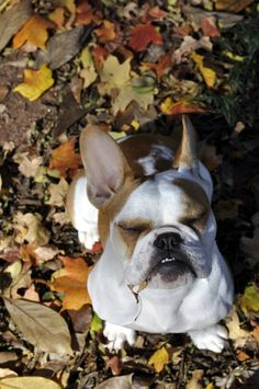 So happy to be outside, who cares there's a leaf hanging out of my mouth! HA!