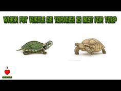 Turtle Feeding Tip - YouTube