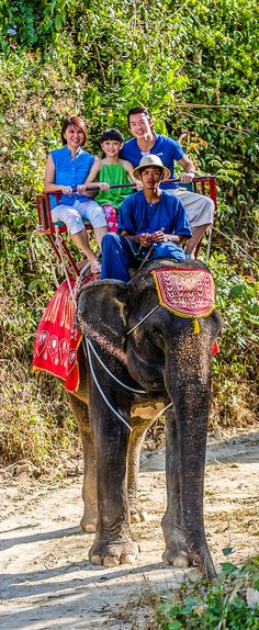 Phuket, Thailand. Visit the Elephant Campand take a ride through the tropical forest atop these gentle giants. Enjoy the camp's young elephant and monkey show, before your exciting jungle trek.