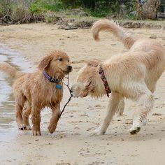 Teddy and Dewey ❤