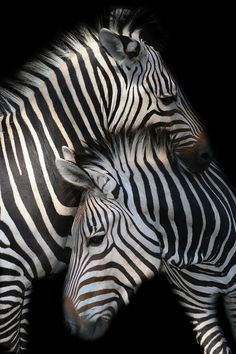 No two zebras look exactly alike. #NETcancer. The zebra is used to describe #NETpatients as, like the animal whose stripes are unique to it alone, absolutely no two NET cancer patients are the same.